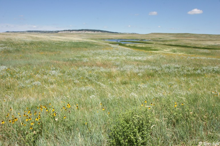 Grand River National Grasslands, Harding County, South Dakota