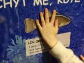 NZM - Rybářství