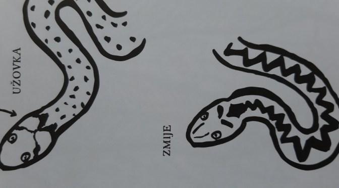 Pozor, zmije!
