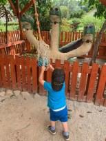 06b - Houbovy park Rosec