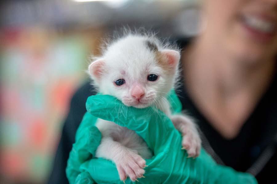 kitten nursery san diego