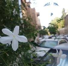 صورة دمشق حبيبتي