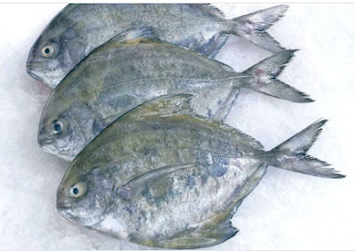 Reefberry Foodex Pvt Ltd Seafood Exporters Beyond Luxury