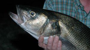Rough ground bass fishing