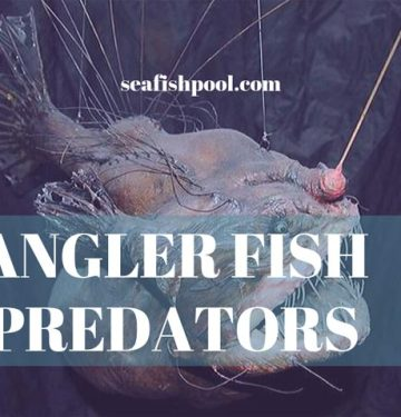 Angler-Fish-Predators