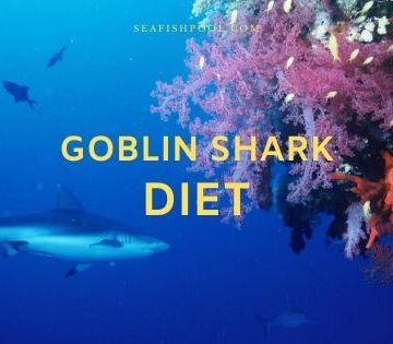 goblin shark diet