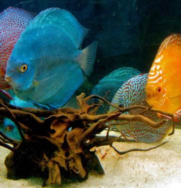 How to set up a small fish tank
