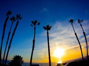 California trees shot on SeaLife underwater camera
