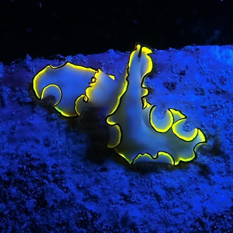 Sea plant under Sea Dragon Fluoro underwater light