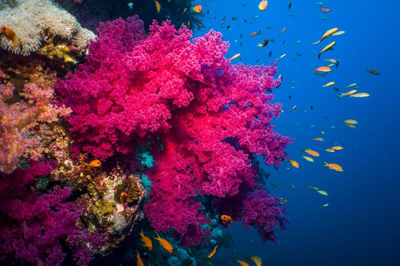 underwater photography aquatic life sealife cameras
