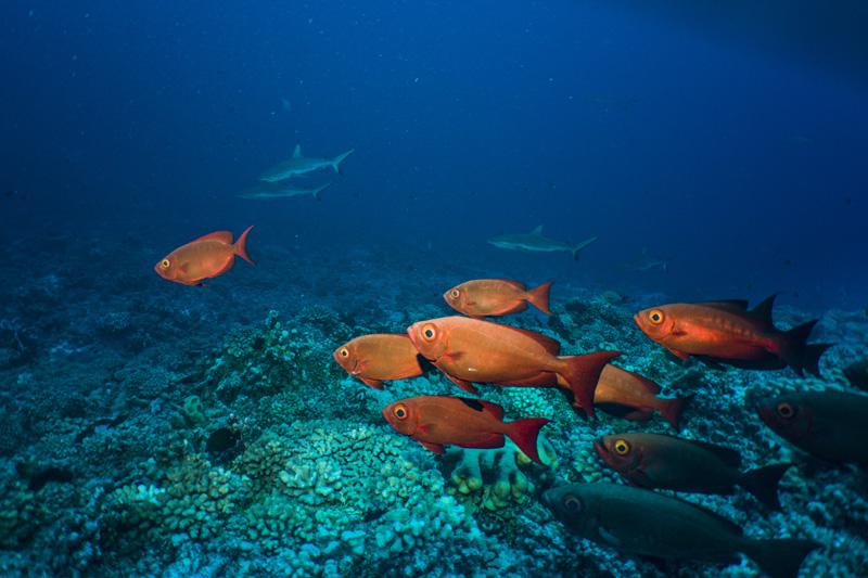 Ocean floor surface photography - sealife cameras