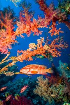 Ocean floor photography Tobias Friedrich DC2000 sealife camera