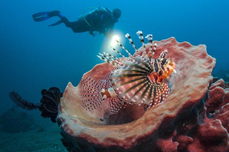 lionfish below surface dc2000 sea dragon flash