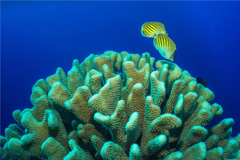 rangiroa french polynesia underwater sealife dc2000 sea dragon flash photography