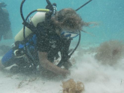 ocean diving photo backscatter sand