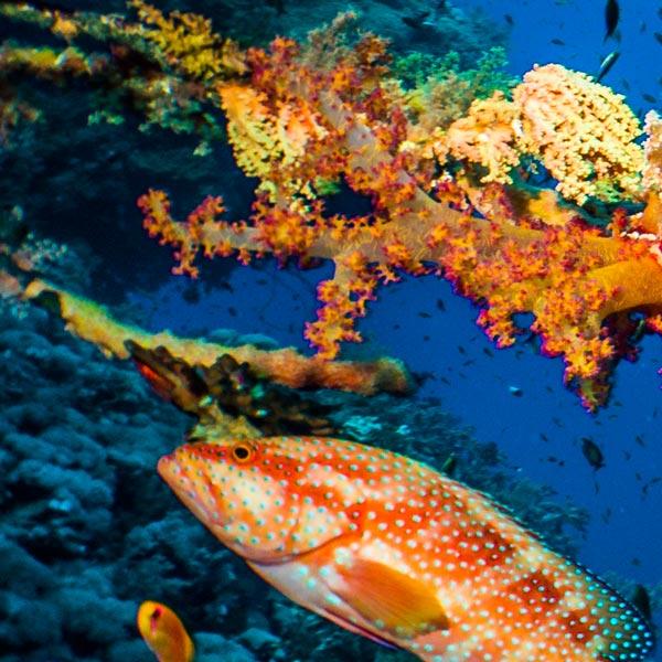 Coral reef shot on DC2000 underwater camera