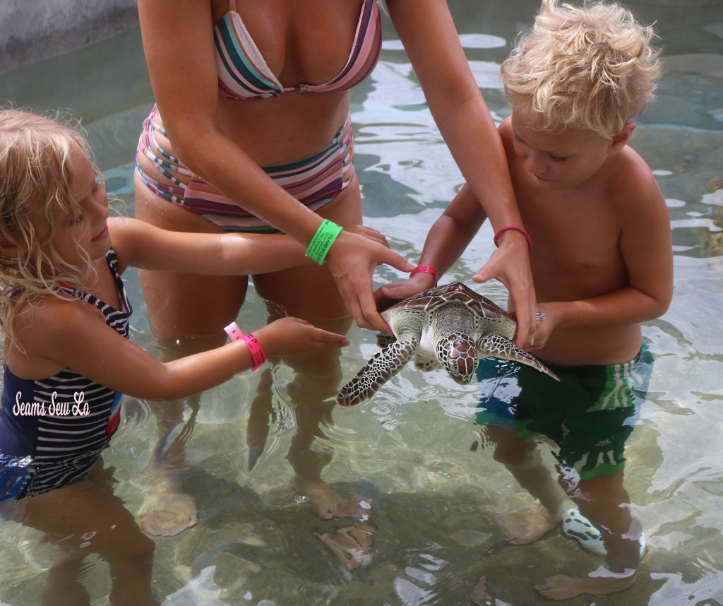 Cayman Turtle Center Holding Turtles