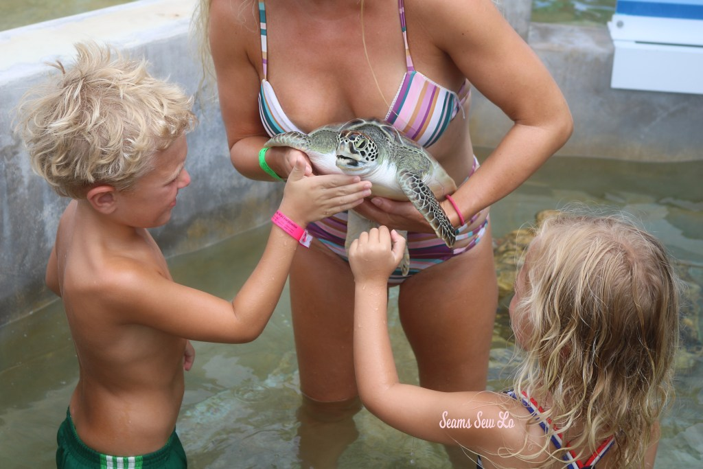 Holding and petting turtles at the Grand Cayman Turtle Center