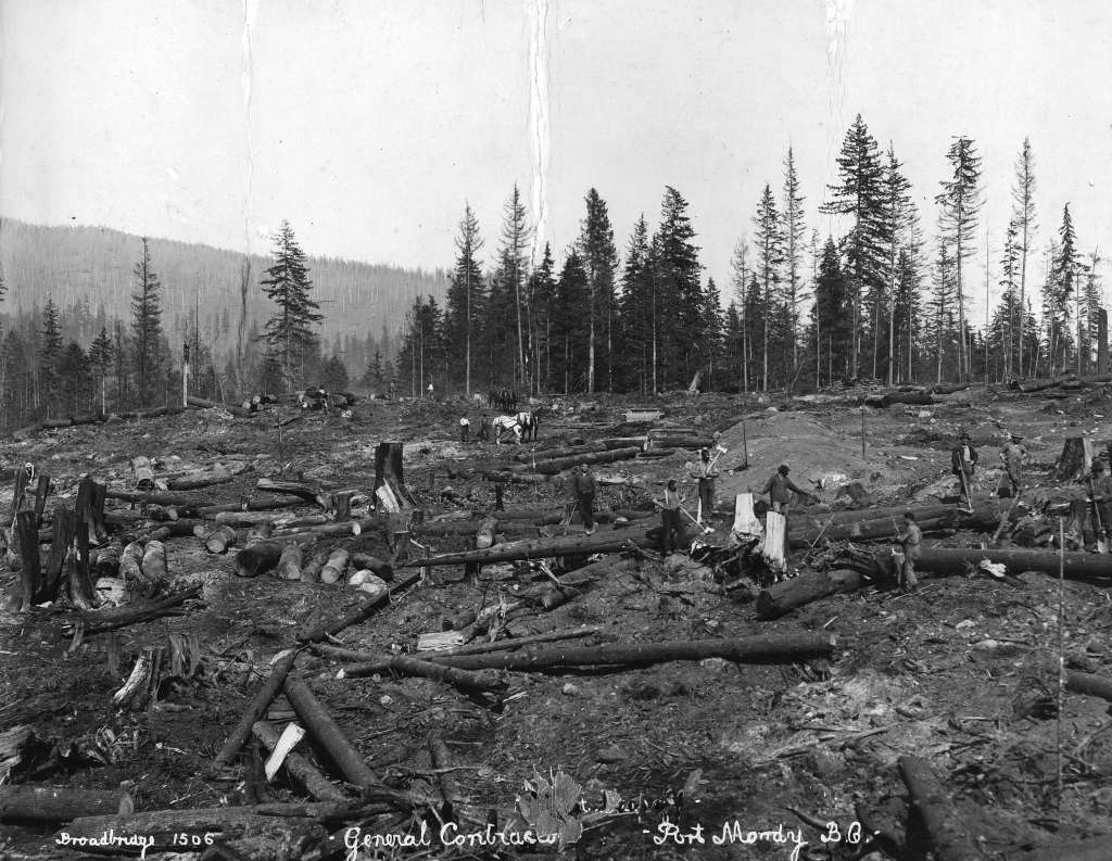 Clearing site for Imperial Oil refinery at Ioco, 1914. Source: City of Vancouver Archives.