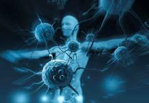 Sistema imunológico no combate a todos os tipos de câncer
