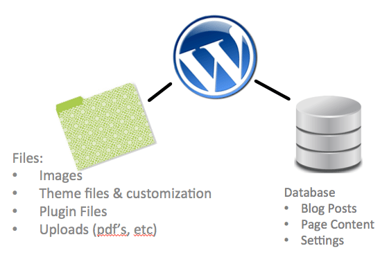 WordPress Files | Database