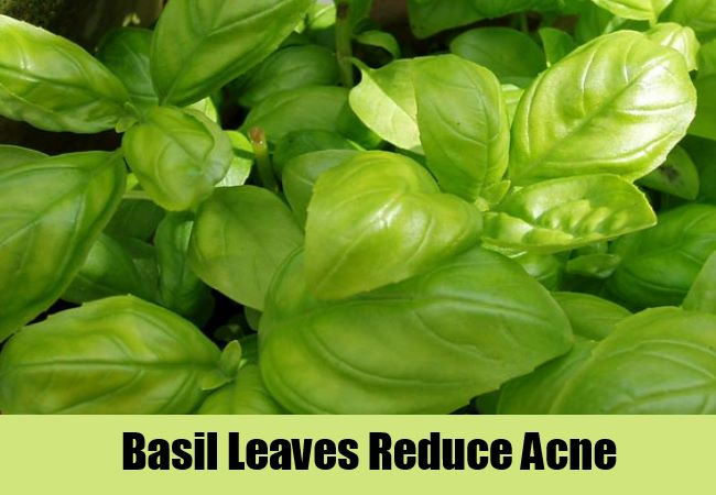 Basil Leaves Reduce Acne