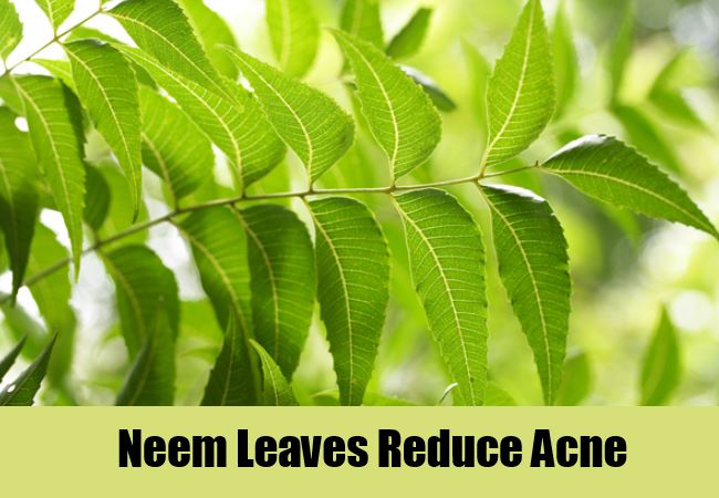 Neem Leaves Reduce Acne