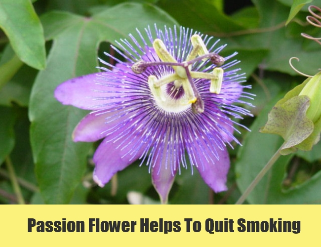 Passion Flower Helps To Quit Smoking