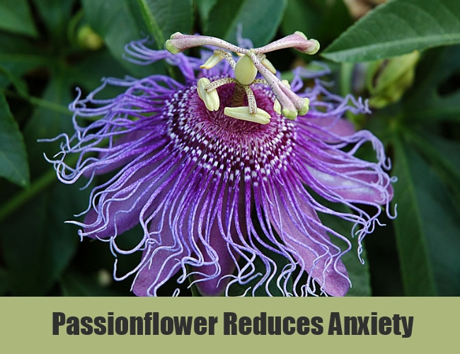 Passionflower Reduces Anxiety