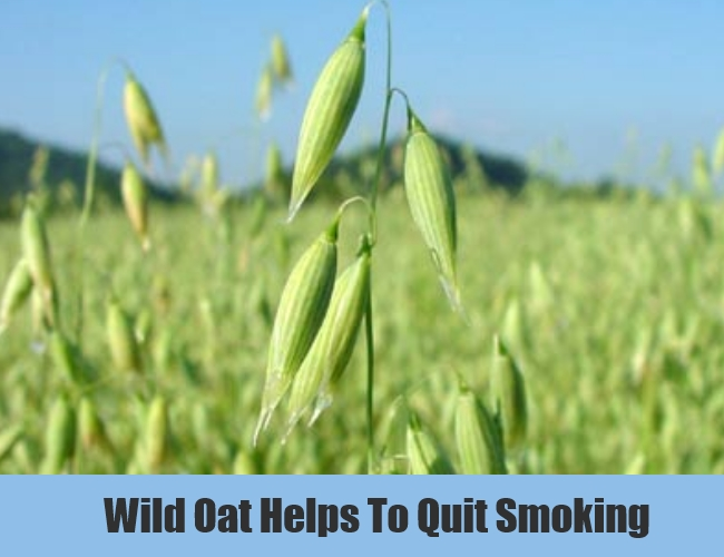 Wild Oat Helps To Quit Smoking