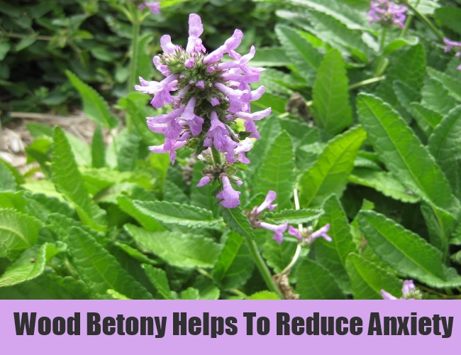 Wood Betony Helps To Reduce Anxiety
