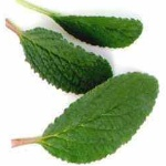 Herbal Remedy For Depression