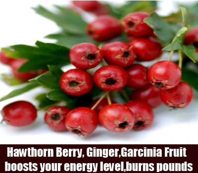 Hawthorn Berry, Ginger And Garcinia Fruit