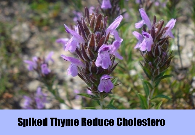 Spiked Thyme