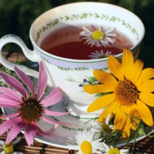 Try Echinacea Root Tea