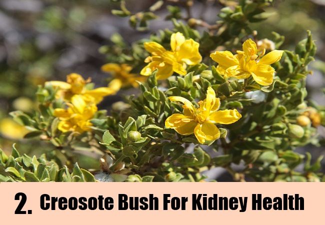 Top 8 Herbs For Kidney Health How To Keep Kidney Healthy