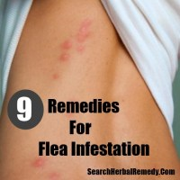 home remedies for fleas in house home remedies for fleas ...