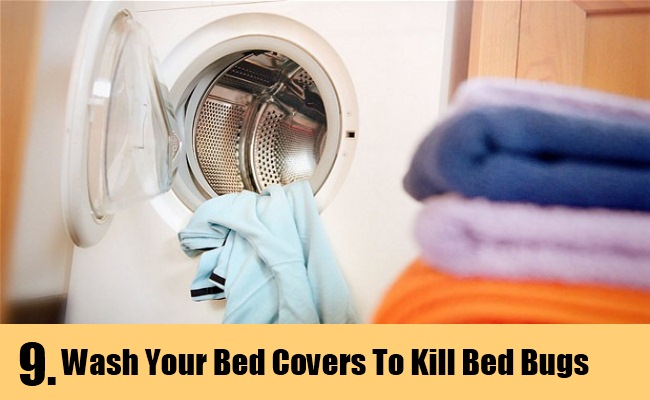 9 Home Remedies To Kill Bed Bugs Natural Treatments
