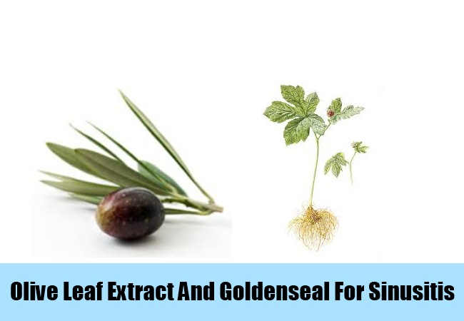 Olive Leaf Extract And Goldenseal
