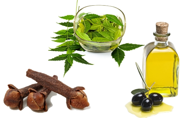 Neem, Clove And Olive Oil