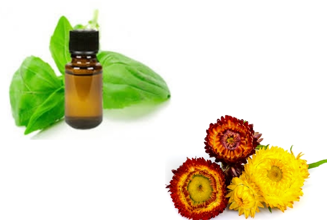 Helichrysum And Basil Oil Blend