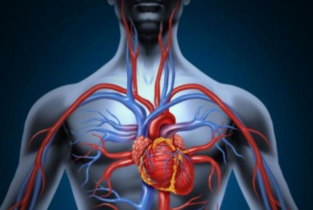 It Improves Blood Circulation