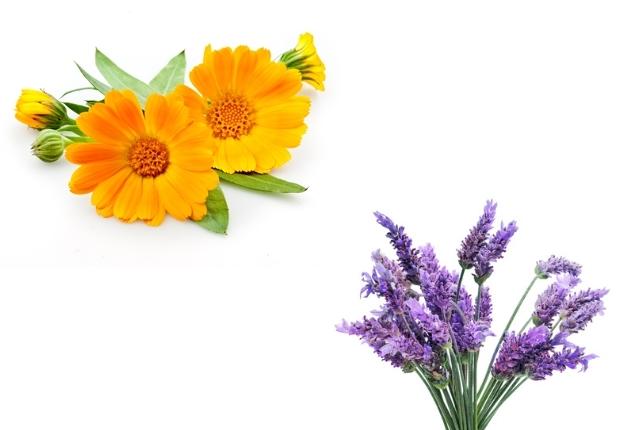 Calendula And Lavender