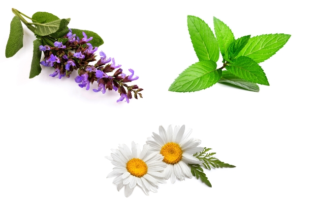 Peppermint, Clary Sage And Chamomile