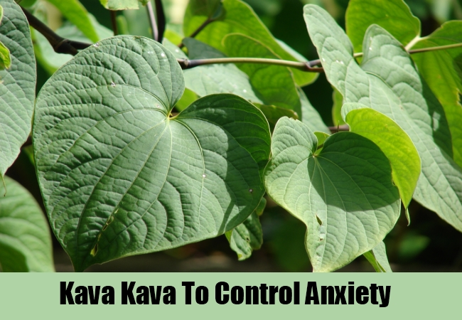 Kava Kava To Control Anxiety