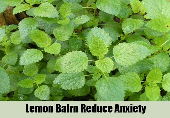 Lemon Balrn Reduce Anxiety