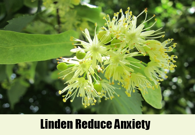 Linden Reduce Anxiety
