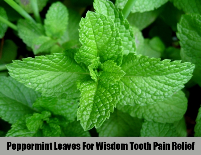 Peppermint Leaves For Wisdom Tooth Pain Relief