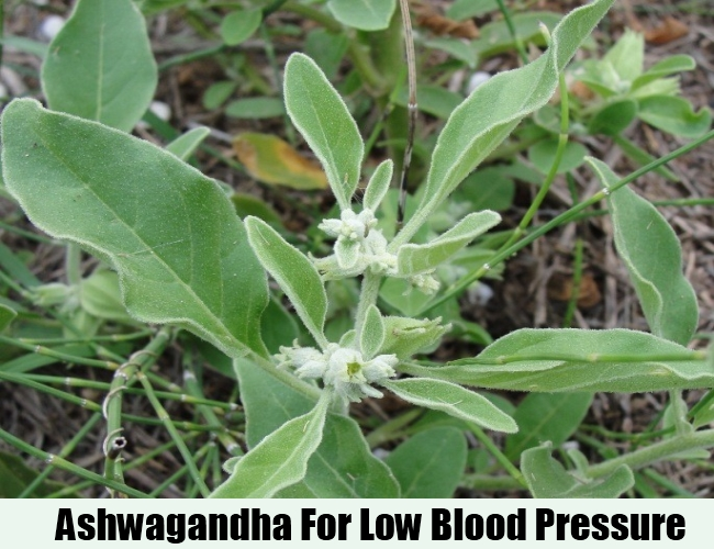 Ashwagandha For Low Blood Pressure