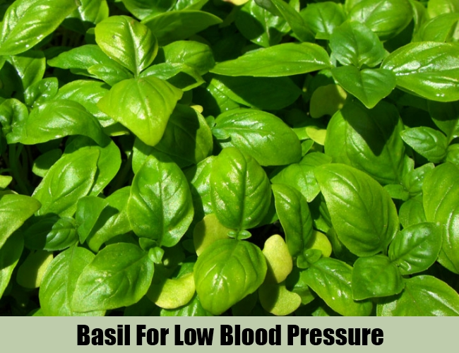 Basil For Low Blood Pressure